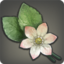 Alyssum Icon.png