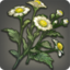 Chickweed Icon.png
