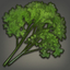 Curly Parsley Icon.png