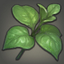 Lime Basil Icon.png
