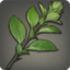 Marjoram Icon.png