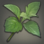 Peppermint Icon.png