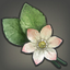 Sweet Alyssum Icon.png
