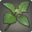 Yanxian Parsley Icon.png